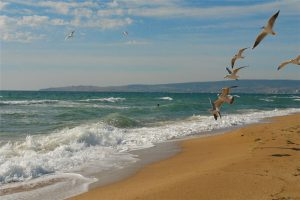 Золотой пля, береговое, феодосия
