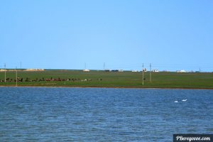 озеро за домом лебеди