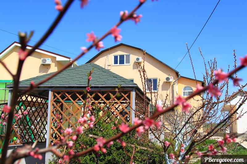 Персик и гостевой дом в Береговом