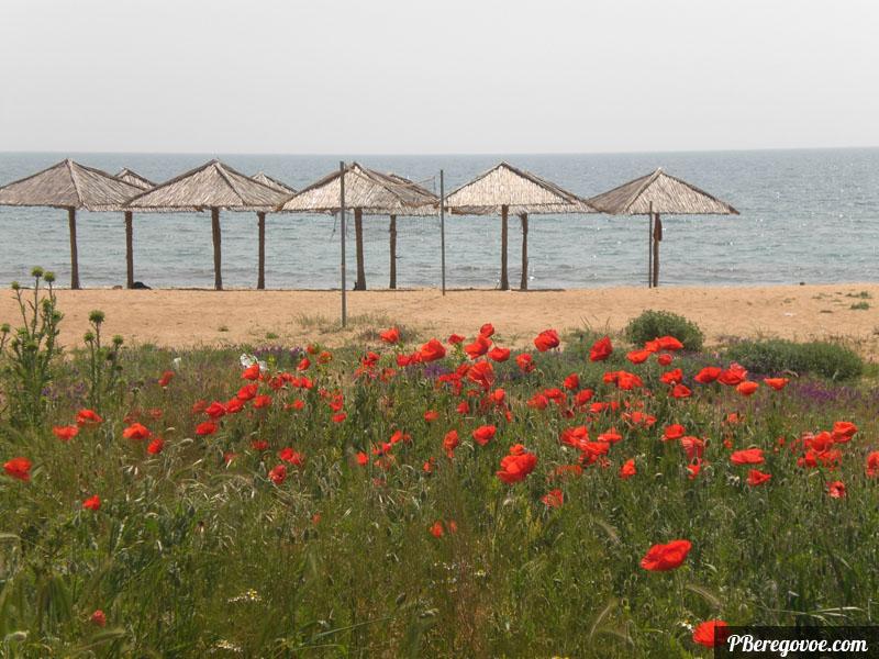 маки и фото пляжа в береговом, феодосия