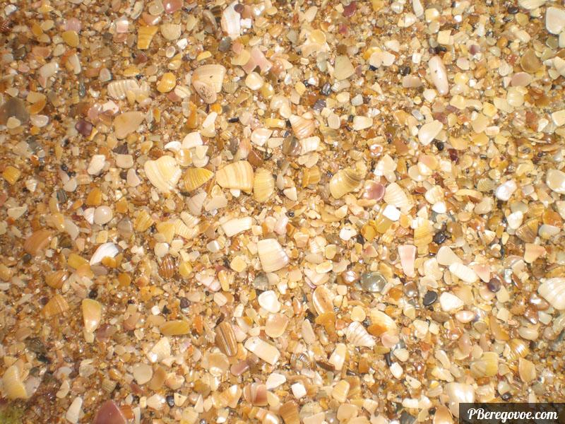 ракушки на пляже береговое